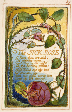 """The Sick Rose,"" a poem from Songs of Innocence and Experience by William Blake."