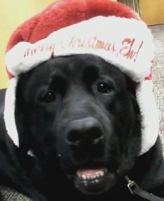 Christmas Cole